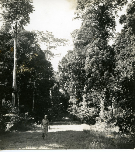 Hugh Curran on the road to Mount Makiling