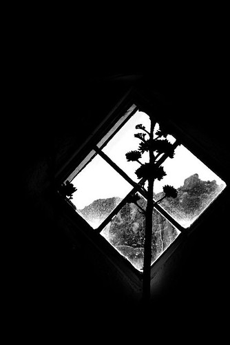 Dried flowers window silhouette