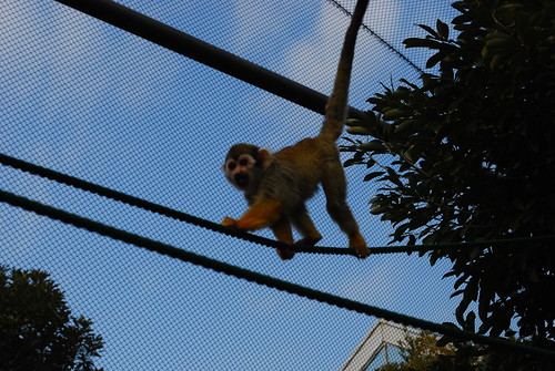 monkey at the zoo