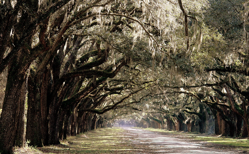 Wormsloe Plantation, Savannah, GA - 2