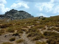 Vers le ruisseau de Pascialella au N de Punta di A Bambiola : les genêts de Lobel