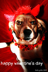 Love Bites (photo and poem) (faith goble) Tags: red roses dog art love beagle angel friend artist photographer heart kentucky ky horns larry creativecommons poet devil writer bowlinggreen loyal adoration doggerel royaltyfree dogged happyvalentinesday originalpoem faithgoble gographix faithgobleart