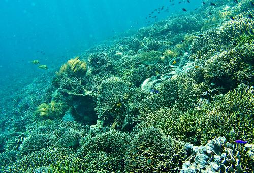 Flores Underwater 21