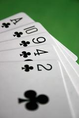 Playing cards (matthewgrocott) Tags: