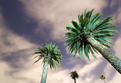 Trees (flashinglikeatourist) Tags: california trees light sky night digital los crazy nikon long exposure angle cloudy angeles low wide palm pasadena nikkor d40 nocture f354 1024mm