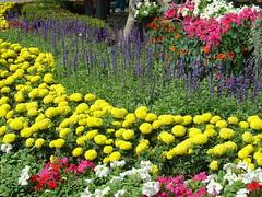 รวมดอกไม้