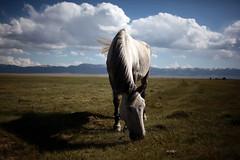 Kyrgystan - Song Kol (yanseiler) Tags: travel canon asia central pasture asie kyrgyzstan jailoo asiecentrale ussrurss