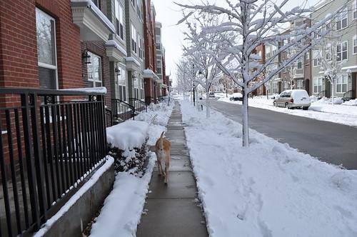 midday walk
