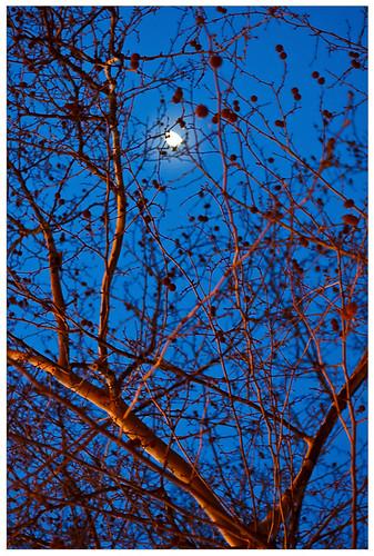 Speyer by Night
