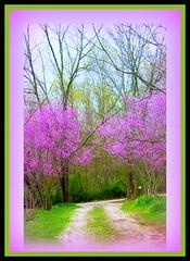 Drive (Chipmunk Hill Arts) Tags: tree nature spring indiana bloomington picnik redbud monroecounty katiewolfe