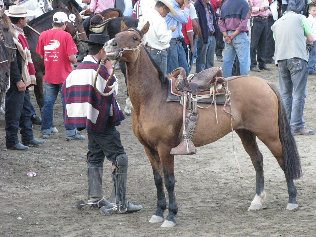 Rodeo Melipilla IMG_3906