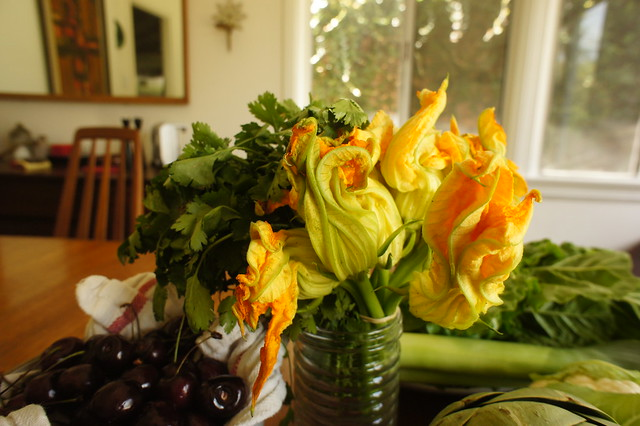 cilantro and squash blossom