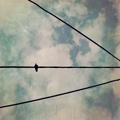 #telaviv #israel #ig_israel #insta_telaviv #instagram_israel #insta_israel #urban #sky #clouds #bird #geometry #wires #shimizacken #hipstamatic (shimizacken) Tags: street sky urban abstract lines birds square israel telaviv geometry pigeons shapes wires squareformat cloudes iphoneography hipstamatic blankofilm instagramapp uploaded:by=instagram oggl hipstography shimizacken yoonalens