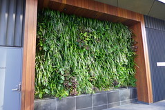 Green Wall (tanetahi) Tags: brisbane southbank exotic tropical greenery subtropical tropicalplants landscapedesign foliageplants amenityplanting amenitylandscaping