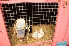 Liten kanin i matskål