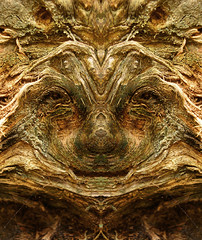 Lanz (Elido Turco - Gigi) Tags: wood portrait italy face spirit digitalart dream natura explore bark creatures albero tronco muschio ritratto middleages viso legno bosco corteccia foresta radice middle casondilanza dreamcreatures ages elidoturco creattivit