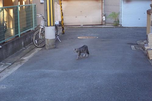 Today's Cat@20091031