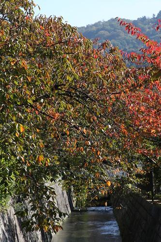 色づく木々