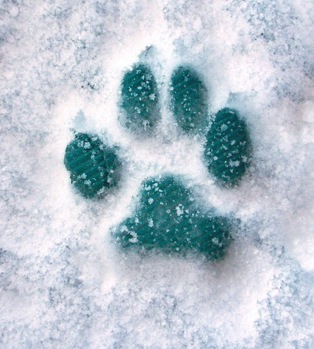 Happy's frozen paw print Nov. 6