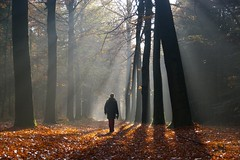 Walking on sunshine (Johan_Leiden) Tags: autumn trees light fall netherlands walk nederland thenetherlands hike hiker rays stroll sunbeams raysoflight veenendaal prattenburg mywinners