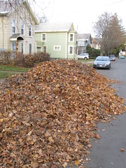 leaves we raked at apt bldg