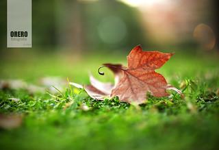 Basic Autumn