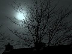 Bedroom view (Elly Snel) Tags: trees roof sky moon home night dark bomen nacht thuis lucht chimneys donker dak maan schoorstenen 15challengeswinner beginnerdigitalphotographychallengeswinner
