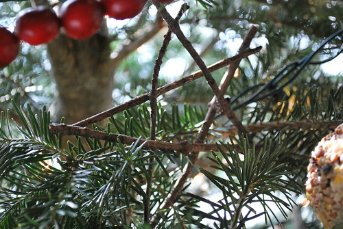 Wild Olive: a woodland christmas...