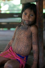 embera scallop tattoos on girl panama (martibrown1photo) Tags: indian panama tribe tatoo embera indio indigenous centralamerica jagua lachunga