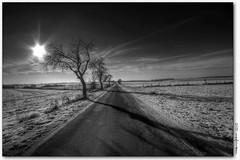 winterlich(t) (manfred-hartmann) Tags: schnee winter bw germany strasse felder explore sonne hartmann bäume baum hdr januar manfred weg lüneburg stille niedersachsen ruhe strase