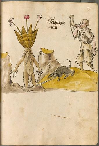 Arzneipflanzenbuch, 1525 n