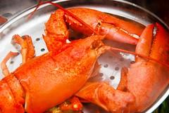 Lobster Sauna