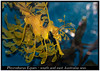 Phycodurus Eques_800_01 (Bruno Cortada) Tags: malawi marino mbunas cíclidos sudafricanos tanganyica