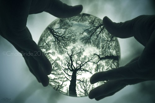 Crystal Ball Forest