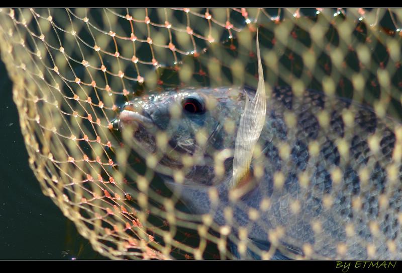 養 搶 釣 死