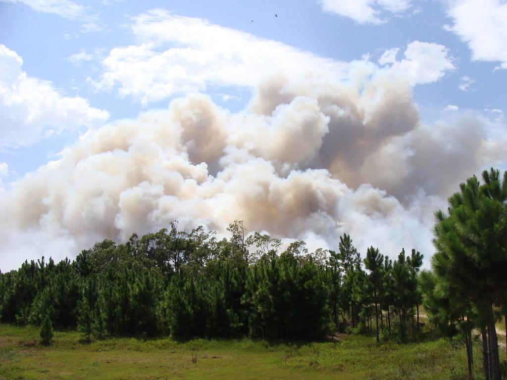 Fogo consumiu área de no mínimo quatro quilômetros de extensão. Crédito: Divulgação