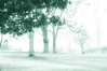 Play Misty for Me... (Chris H#) Tags: trees winter cold grass leaves photoshop soft northamptonshire chilly desaturated lightroom s3000 hikey playmistyforme nikond5000 rushdenhallpark nikor50mmf18lens