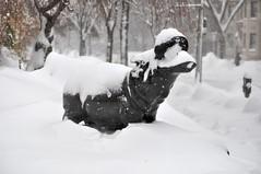 Washington, DC 2010 - 355 (JasonianPhotography) Tags: winter snow animals snowflakes washingtondc districtofcolumbia statues dcist hippopotamus blizzard mammals georgewashingtonuniversity foggybottom snowpocalypse washingtondcblizzard washingtondcsnow afsdxvrzoomnikkor55200mmf456gifed snowgasm snowmageddon snomg snowpocalypsedc washingtondcblizzard2010 snowverkill