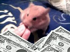 Mmmmmm. (Hamster Lover 14) Tags: hamsters