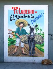 Pulquera (monchor1a) Tags: ranch mxico fuji anuncio burro alcohol fujifilm jumento palomas ramon cantina rancho bebida bebidas s200 moncho exr pulquera monchor1 fermentados monchor1a s200exr fermentos