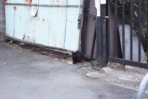 Today's Cat@2010-02-17