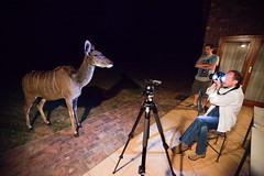 Sneaky Kudu - Day 174, Year 2 (purplemattfish) Tags: game night dark table chair tripod reserve suprise highiso sneak kudu 6400iso project365 mabalingwe ef1635mmf28