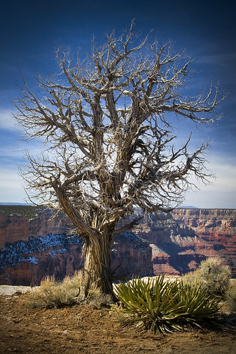 Strength in Weakness - Grand Canyon National Park, AZ