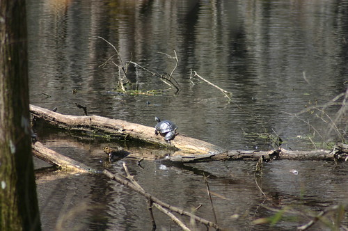 35th Birthday Hike - Two Sunning Turtles (by Ryan Somma)