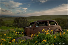 Rental Car (Vinnyimages) Tags: flowers oregon t washington oldcar washingtonstate dalles sunsetcarlziess 21mmt ziessze