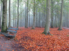 (Eisbeertje) Tags: wood autumn nature forest den herfst nederland natuur haag bos wald canong11
