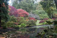 Autumn Colours at Exbury Gardens