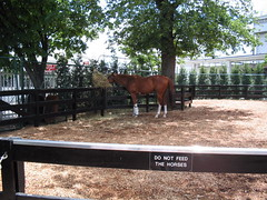 do not feed the horses (studio-s) Tags: horses vineyard kentucky racing louisville riverfront fountains churchilldowns indianfood fourthstreetlive galthousehotel