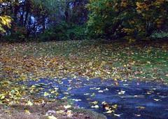 RainyFoliage_102809