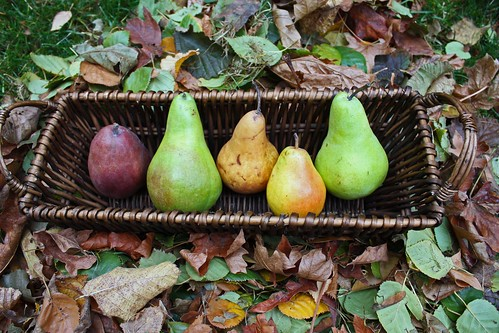 pears on leaves